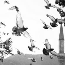 4 Diseases You Can Catch From Pigeons | Medicine Report